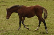 Gwarchod Sect C Filly Foal 2010 out of Gydros